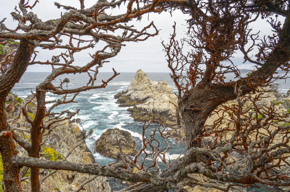 Point Lobos Panorama Shots
